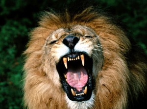 His Baptism by fire turned the Cub into a roaring Lion!!